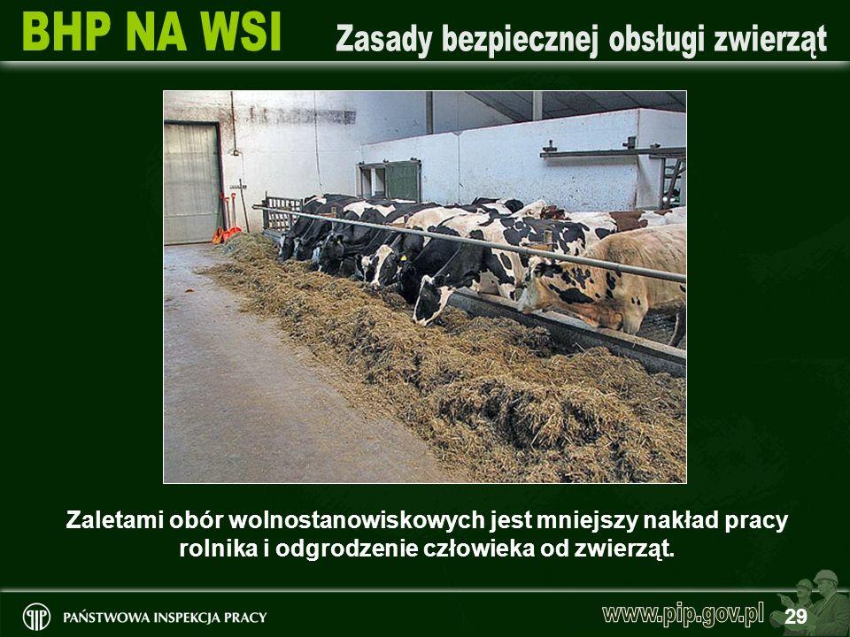 29 Zaletami obór wolnostanowiskowych jest mniejszy nakład pracy rolnika i odgrodzenie człowieka od zwierząt.