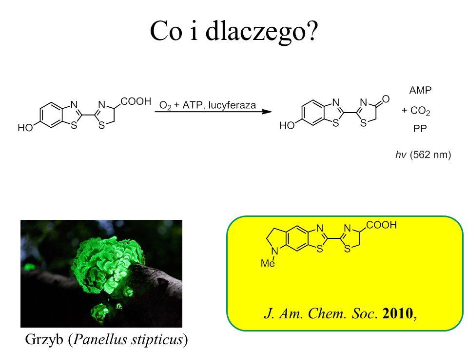 Co i dlaczego? Grzyb (Panellus stipticus) J. Am. Chem. Soc. 2010,