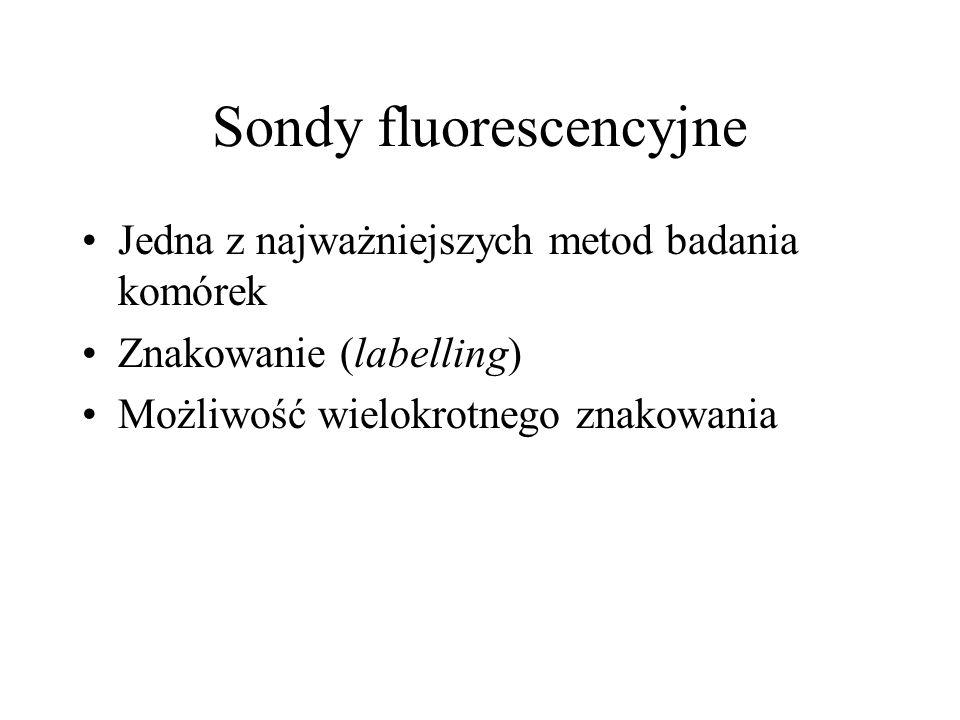 Sondy fluorescencyjne Jedna z najważniejszych metod badania komórek Znakowanie (labelling) Możliwość wielokrotnego znakowania