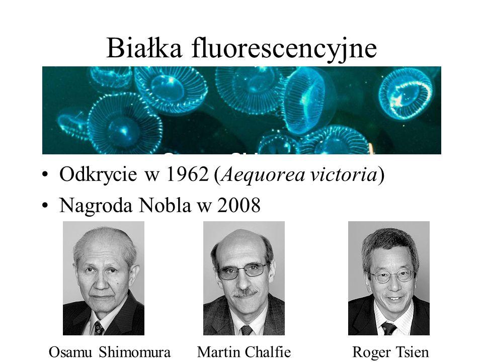 Białka fluorescencyjne Odkrycie w 1962 (Aequorea victoria) Nagroda Nobla w 2008 Roger TsienMartin ChalfieOsamu Shimomura