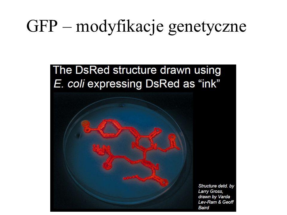 GFP – modyfikacje genetyczne