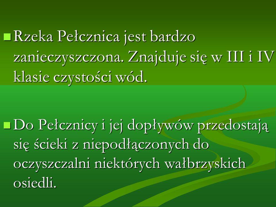 Rzeka Pełcznica jest bardzo zanieczyszczona.Znajduje się w III i IV klasie czystości wód.