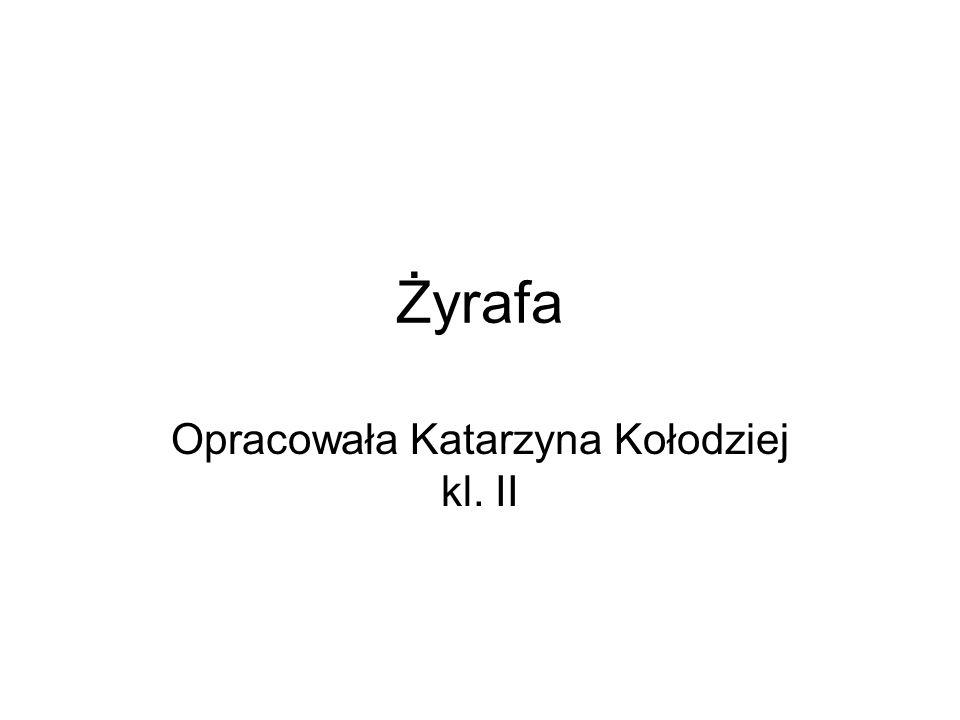 Żyrafa Opracowała Katarzyna Kołodziej kl. II