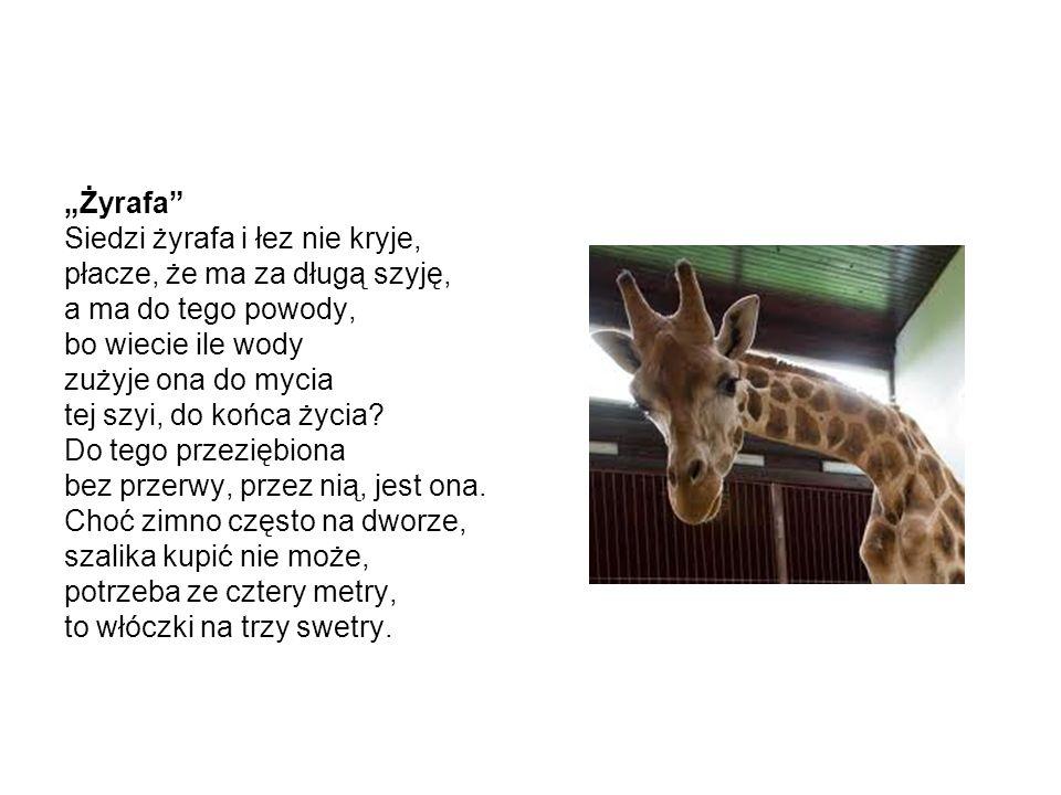 Żyrafa Siedzi żyrafa i łez nie kryje, płacze, że ma za długą szyję, a ma do tego powody, bo wiecie ile wody zużyje ona do mycia tej szyi, do końca życ