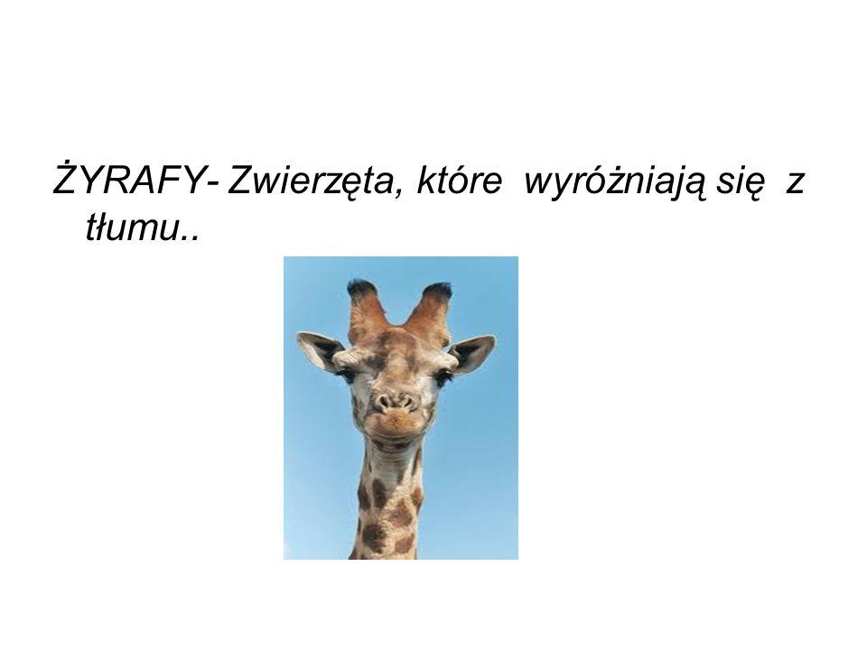 Żyrafy rzeczywiście wyróżniają się z tłumu.