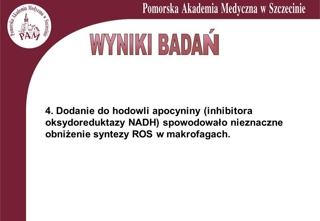 4. Dodanie do hodowli apocyniny (inhibitora oksydoreduktazy NADH) spowodowało nieznaczne obniżenie syntezy ROS w makrofagach.
