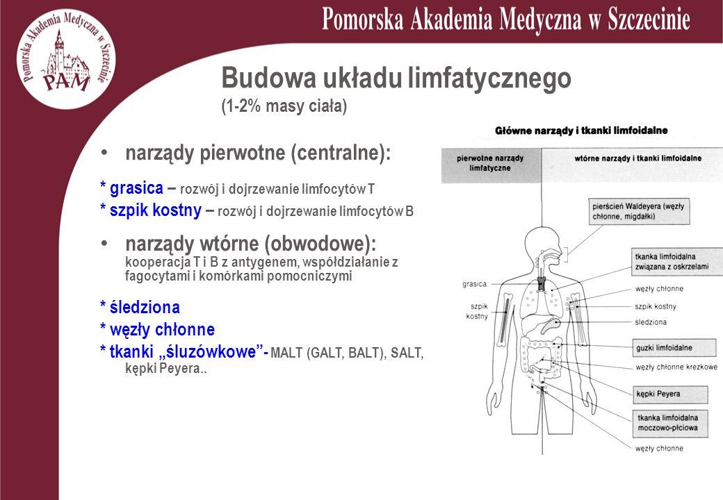 Budowa układu limfatycznego (1-2% masy ciała) narządy pierwotne (centralne): * grasica – rozwój i dojrzewanie limfocytów T * szpik kostny – rozwój i d
