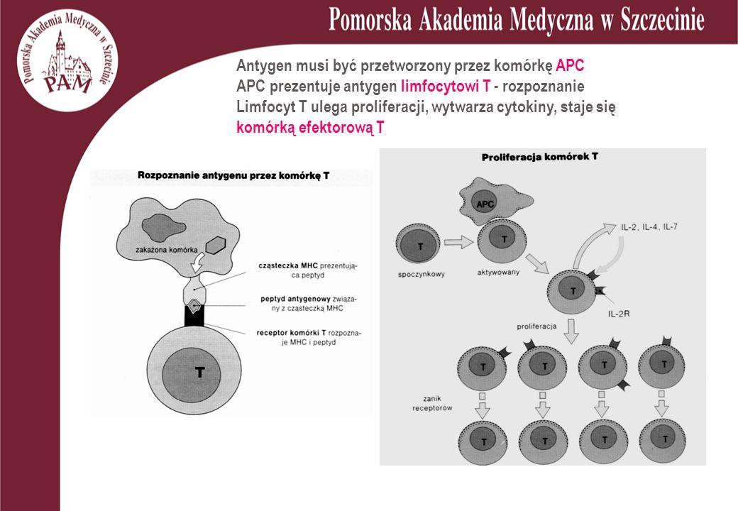 Antygen musi być przetworzony przez komórkę APC APC prezentuje antygen limfocytowi T - rozpoznanie Limfocyt T ulega proliferacji, wytwarza cytokiny, staje się komórką efektorową T