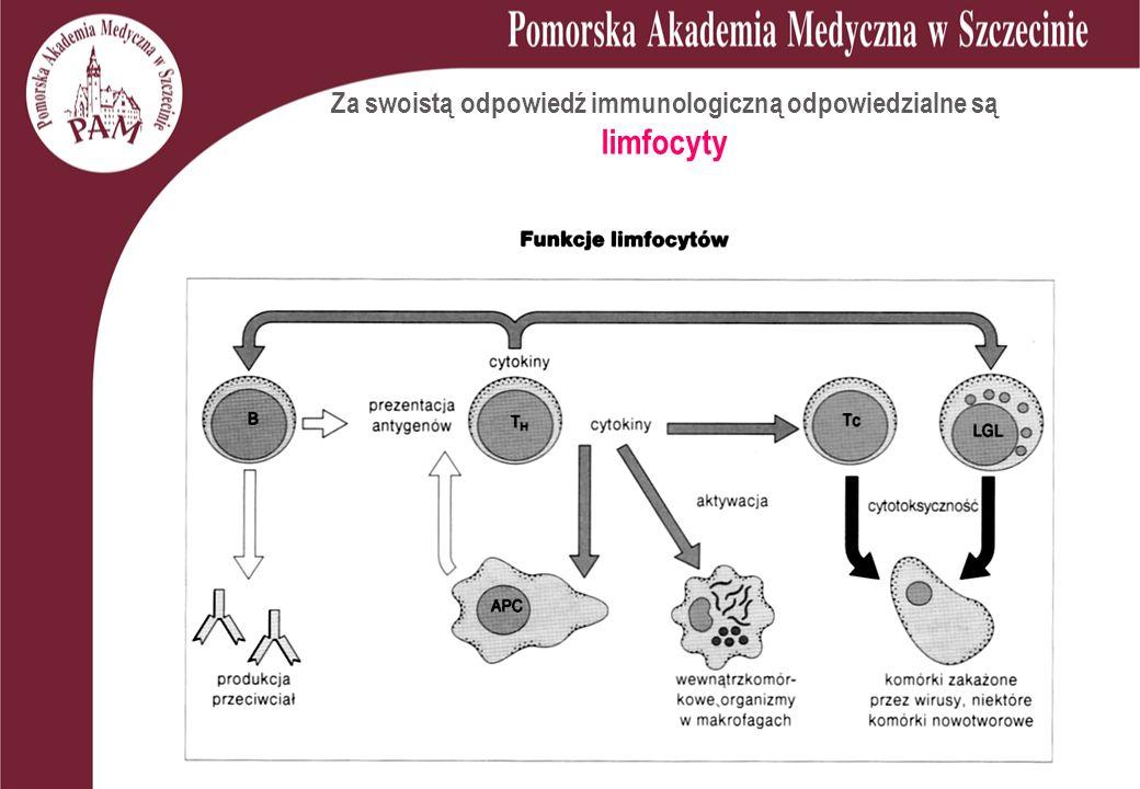 Za swoistą odpowiedź immunologiczną odpowiedzialne są limfocyty