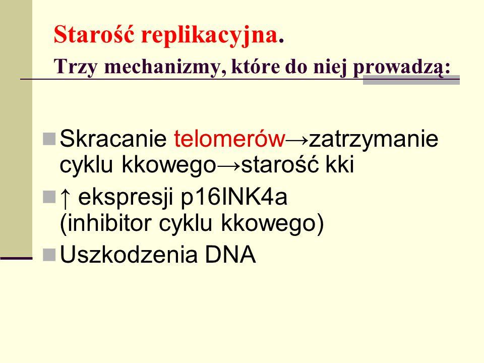 Starość replikacyjna. Trzy mechanizmy, które do niej prowadzą: Skracanie telomerów zatrzymanie cyklu kkowego starość kki ekspresji p16INK4a (inhibitor