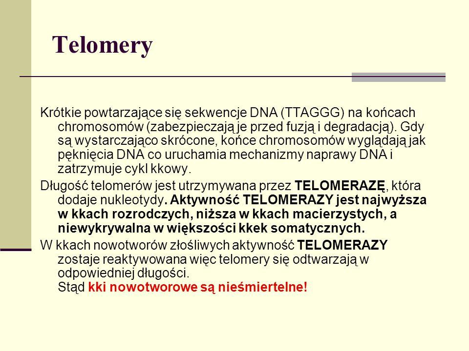 Telomery Krótkie powtarzające się sekwencje DNA (TTAGGG) na końcach chromosomów (zabezpieczają je przed fuzją i degradacją). Gdy są wystarczająco skró