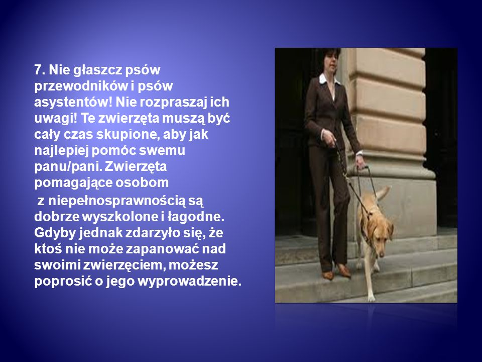 7. Nie głaszcz psów przewodników i psów asystentów! Nie rozpraszaj ich uwagi! Te zwierzęta muszą być cały czas skupione, aby jak najlepiej pomóc swemu
