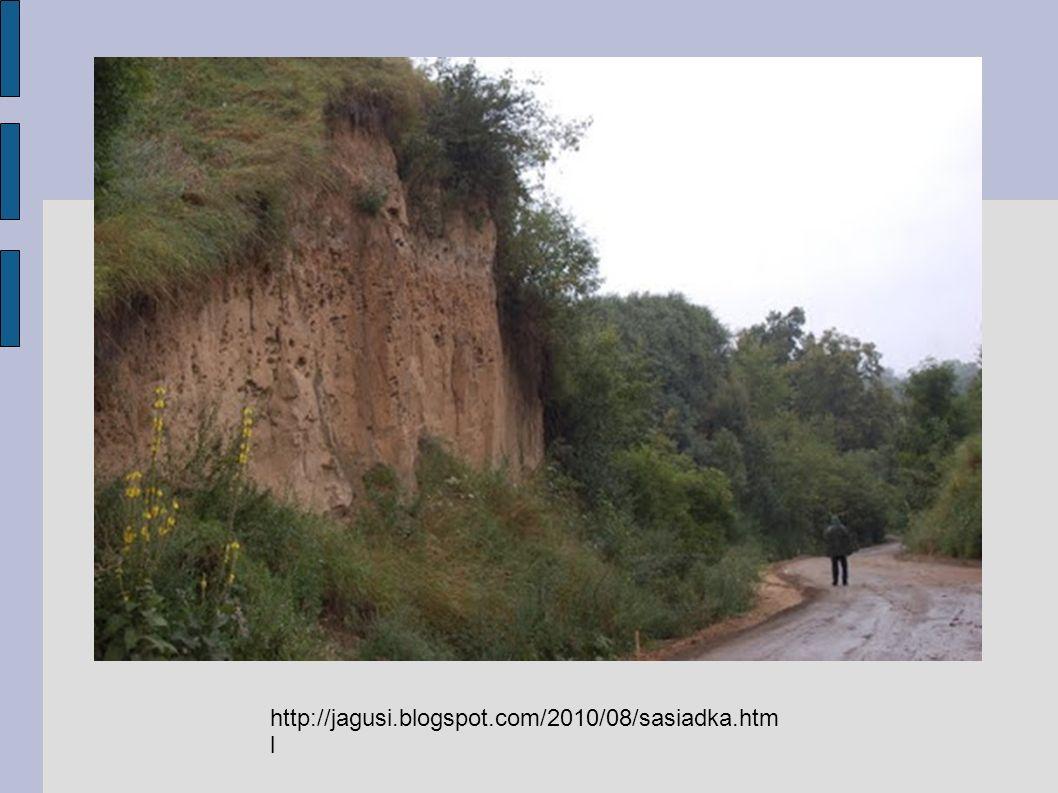 Zdjęcie ze strony http://www.karolina-wojciechowska.za.pl/pustynia- piaszczysta.htm