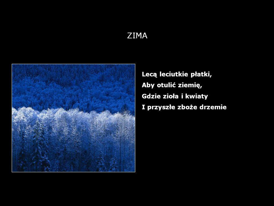 21 ZIMA Lecą leciutkie płatki, Aby otulić ziemię, Gdzie zioła i kwiaty I przyszłe zboże drzemie