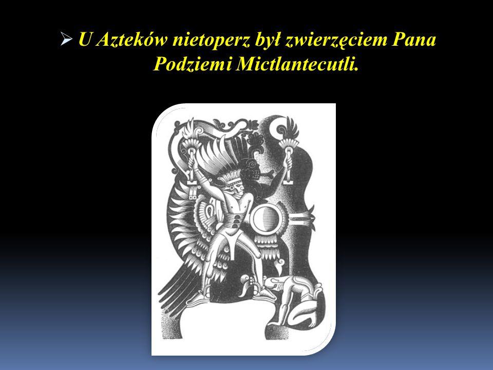 U Azteków nietoperz był zwierzęciem Pana Podziemi Mictlantecutli. U Azteków nietoperz był zwierzęciem Pana Podziemi Mictlantecutli.