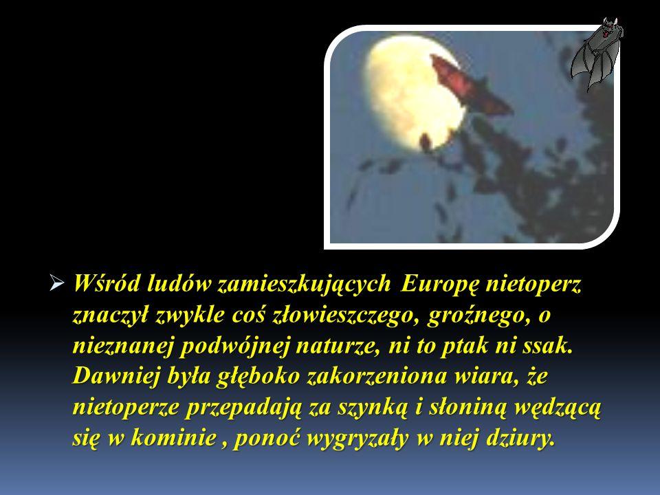 Wśród ludów zamieszkujących Europę nietoperz znaczył zwykle coś złowieszczego, groźnego, o nieznanej podwójnej naturze, ni to ptak ni ssak. Dawniej by