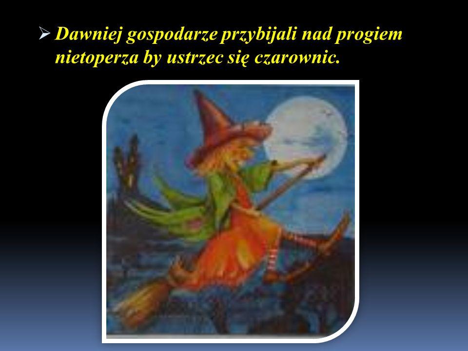 Dawniej gospodarze przybijali nad progiem nietoperza by ustrzec się czarownic. Dawniej gospodarze przybijali nad progiem nietoperza by ustrzec się cza