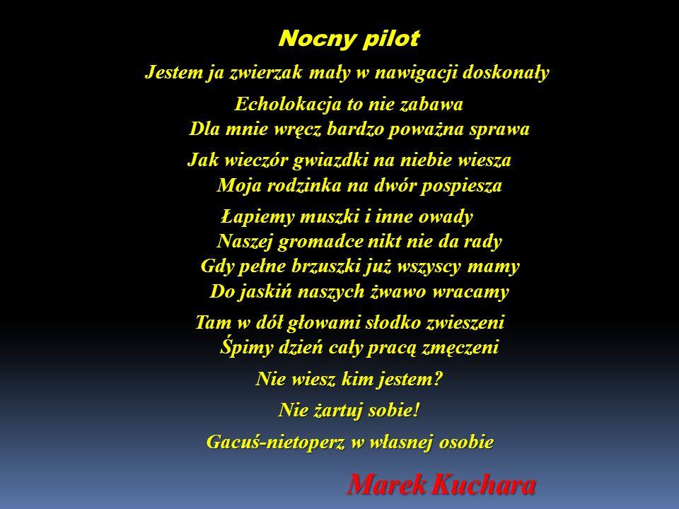 Marek Kuchara Nocny pilot Jestem ja zwierzak mały w nawigacji doskonały Echolokacja to nie zabawa Dla mnie wręcz bardzo poważna sprawa Echolokacja to
