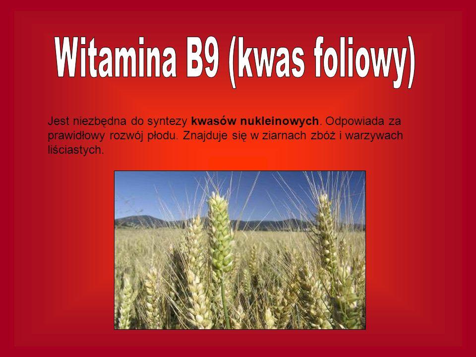 Jest niezbędna do syntezy kwasów nukleinowych. Odpowiada za prawidłowy rozwój płodu. Znajduje się w ziarnach zbóż i warzywach liściastych.