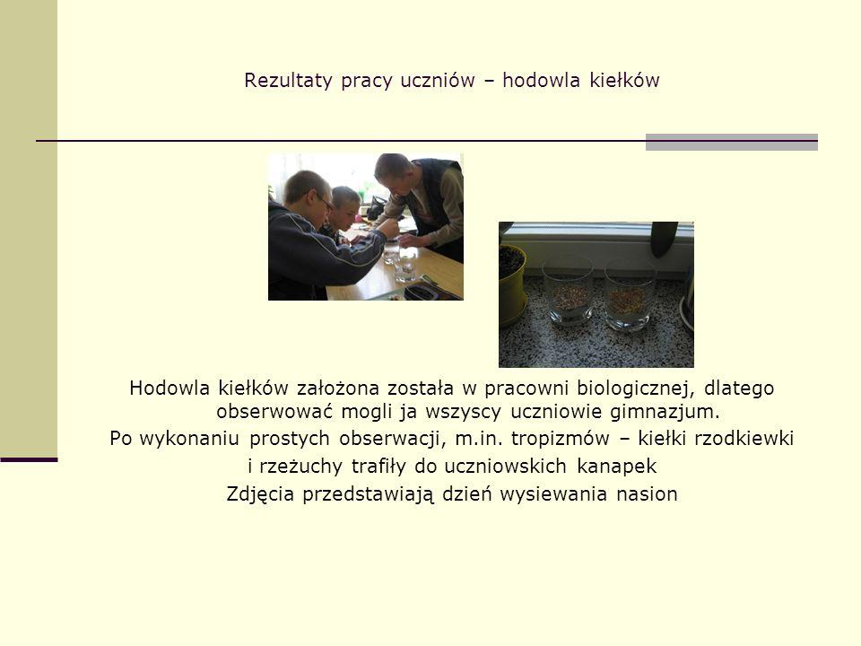 Rezultaty pracy uczniów – hodowla kiełków Hodowla kiełków założona została w pracowni biologicznej, dlatego obserwować mogli ja wszyscy uczniowie gimn