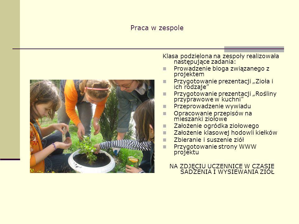 Praca w zespole Klasa podzielona na zespoły realizowała następujące zadania: Prowadzenie bloga związanego z projektem Przygotowanie prezentacji Zioła