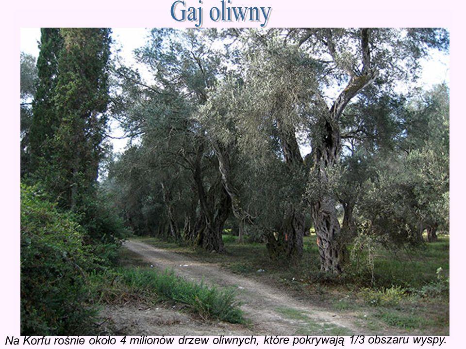 Na Korfu rośnie około 4 milionów drzew oliwnych, które pokrywają 1/3 obszaru wyspy.
