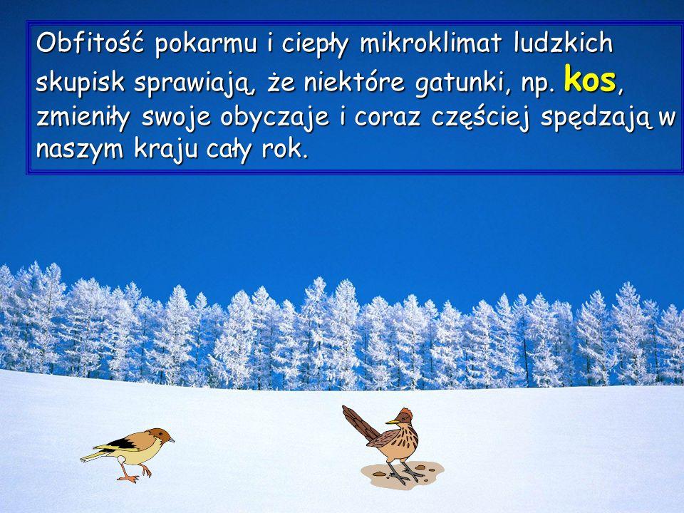 Zima jest szczególną okazją, aby poznać ciekawy świat zwierząt, kiedy głód i chłód sprawiają, że maleje płochliwość zwierząt.