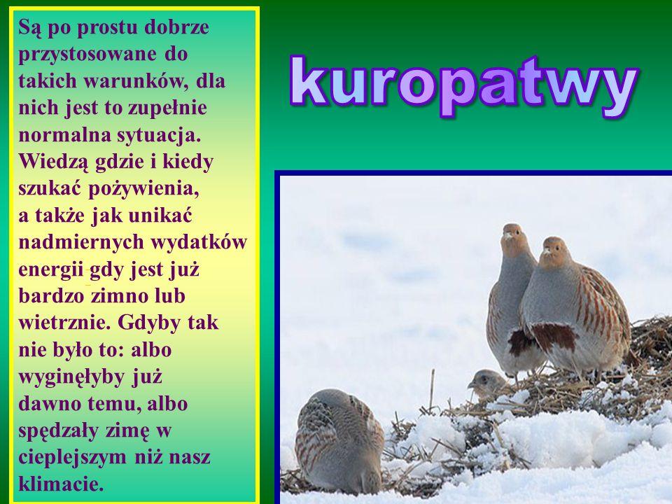 Reszta ptaków obywa się bez naszego wsparcia i szczerze mówiąc wcale go nie wymaga. Nawet najmniejsze mysikróliki (ważą około 5 gramów) zupełnie spoko