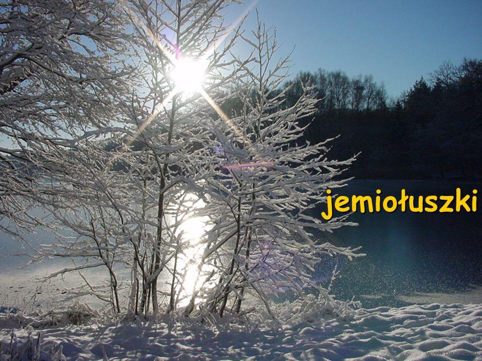 Do tych, które pozostają u nas na zimę dołącza wiele ptaków ze wschodu i północy, gdzie silne mrozy i wiatry oraz zalegający grubą warstwą śnieg utrud