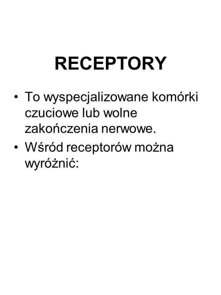 RECEPTORY To wyspecjalizowane komórki czuciowe lub wolne zakończenia nerwowe. Wśród receptorów można wyróżnić:
