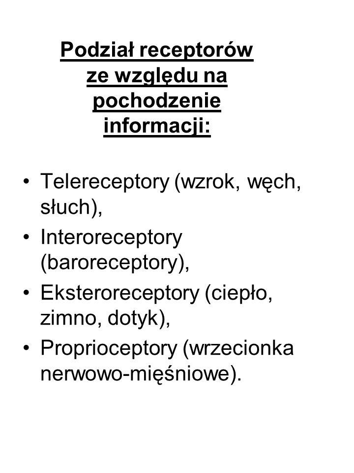 Telereceptory (wzrok, węch, słuch), Interoreceptory (baroreceptory), Eksteroreceptory (ciepło, zimno, dotyk), Proprioceptory (wrzecionka nerwowo-mięśn