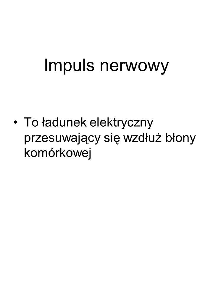 Składa się z 5 zasadniczych elementów: 1) receptora, 2) dośrodkowej drogi doprowadzającej neuronu czuciowego, 3) ośrodka nerwowego (kora mózgowa, rdzeń kręgowy, móżdżek), 4) odśrodkowej drogi wyprowadzającej neuronu ruchowego, 5) efektora.