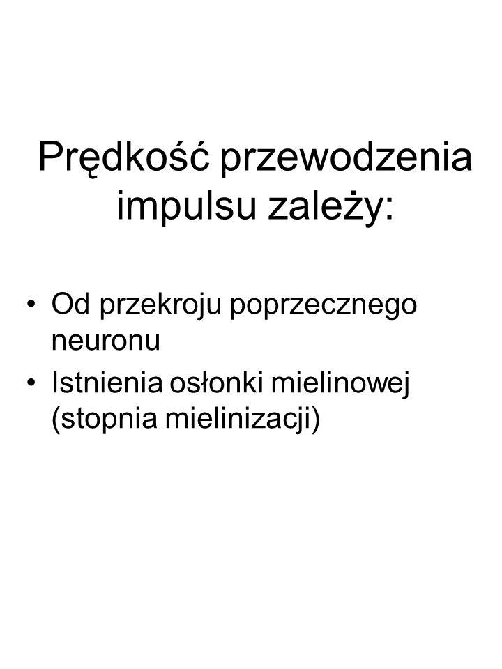 Prędkość przewodzenia impulsu zależy: Od przekroju poprzecznego neuronu Istnienia osłonki mielinowej (stopnia mielinizacji)