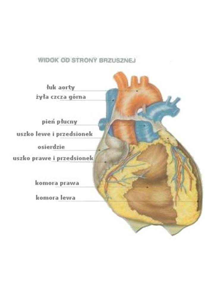 CIŚNIENIE KRWI Ciśnienie krwi to ciśnienie jakie panuje w arteriach, czyli głównych naczyniach krwionośnych organizmu.