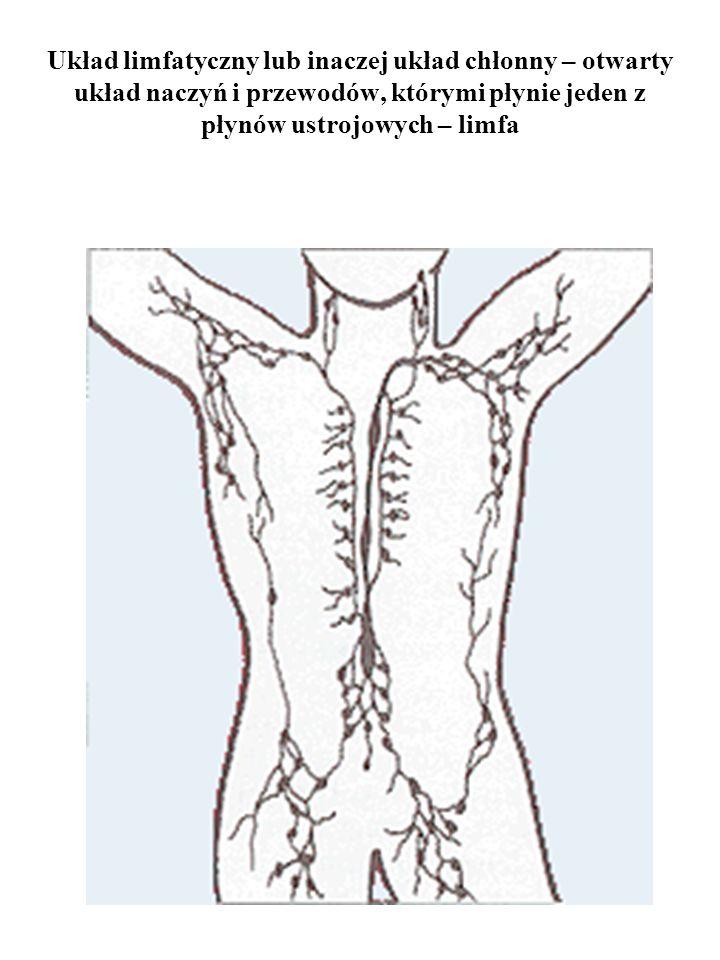 Układ limfatyczny lub inaczej układ chłonny – otwarty układ naczyń i przewodów, którymi płynie jeden z płynów ustrojowych – limfa
