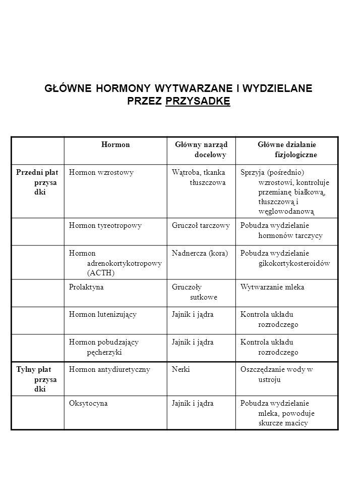 GŁÓWNE HORMONY WYTWARZANE I WYDZIELANE PRZEZ PRZYSADKĘ HormonGłówny narząd docelowy Główne działanie fizjologiczne Przedni płat przysa dki Hormon wzro
