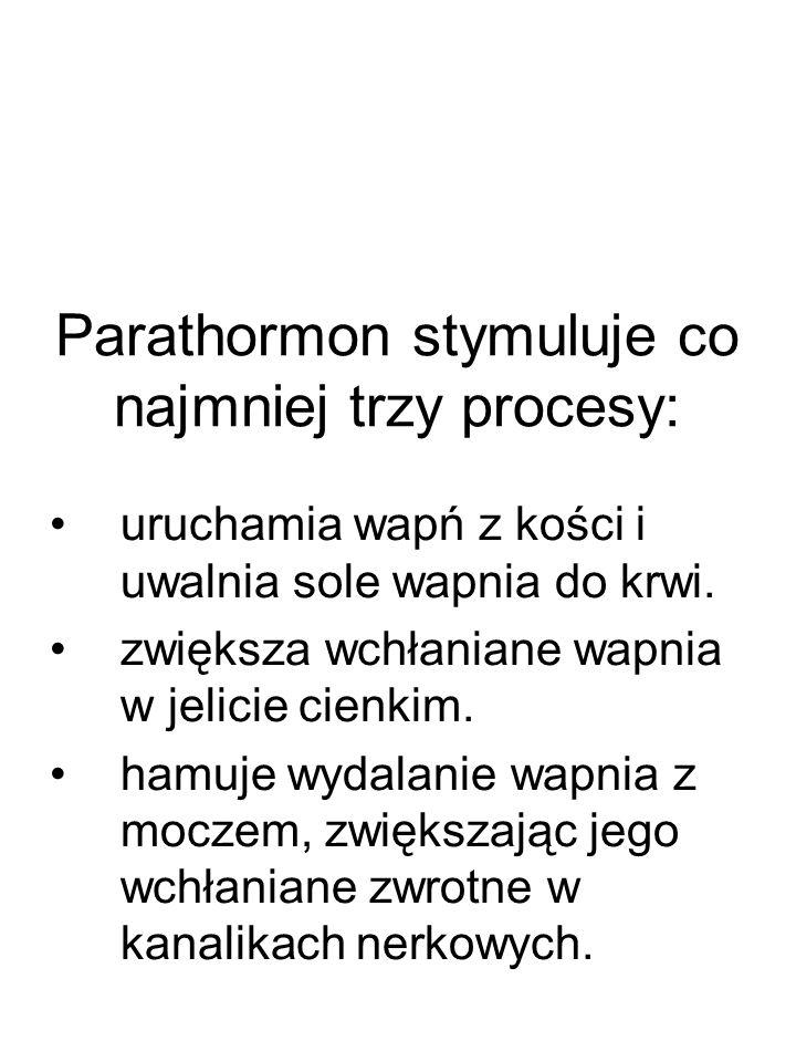 Parathormon stymuluje co najmniej trzy procesy: uruchamia wapń z kości i uwalnia sole wapnia do krwi. zwiększa wchłaniane wapnia w jelicie cienkim. ha