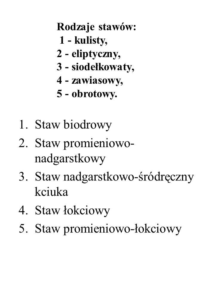 1.Staw biodrowy 2.Staw promieniowo- nadgarstkowy 3.Staw nadgarstkowo-śródręczny kciuka 4.Staw łokciowy 5.Staw promieniowo-łokciowy Rodzaje stawów: 1 -