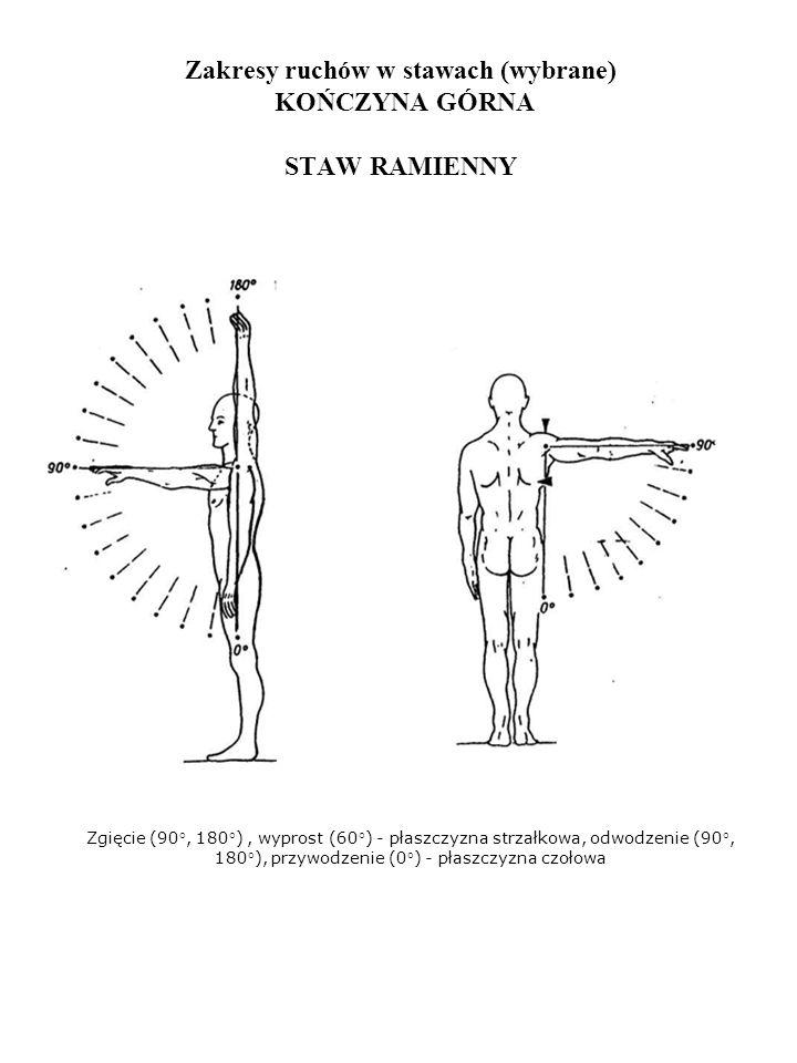 Zakresy ruchów w stawach (wybrane) KOŃCZYNA GÓRNA STAW RAMIENNY Zgięcie (90°, 180°), wyprost (60°) - płaszczyzna strzałkowa, odwodzenie (90°, 180°), p