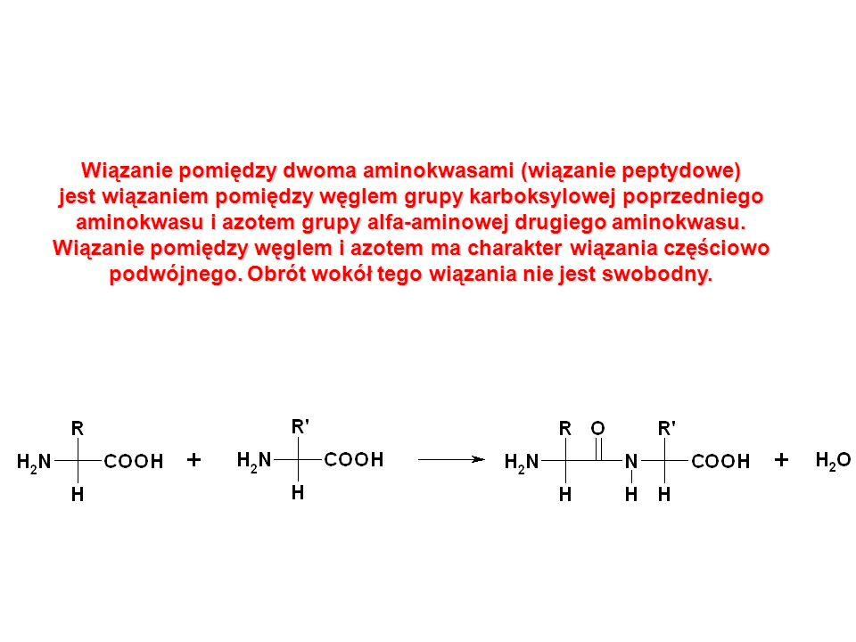 Wiązanie pomiędzy dwoma aminokwasami (wiązanie peptydowe) jest wiązaniem pomiędzy węglem grupy karboksylowej poprzedniego aminokwasu i azotem grupy al