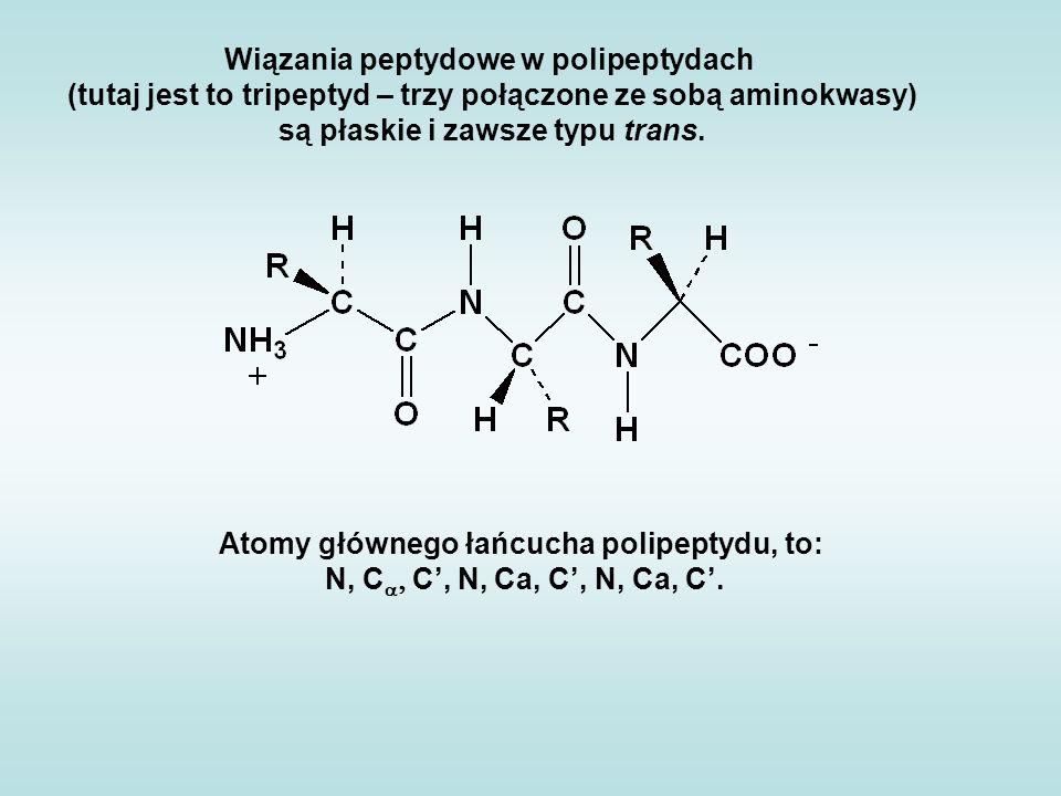 Wiązania peptydowe w polipeptydach (tutaj jest to tripeptyd – trzy połączone ze sobą aminokwasy) są płaskie i zawsze typu trans. Atomy głównego łańcuc