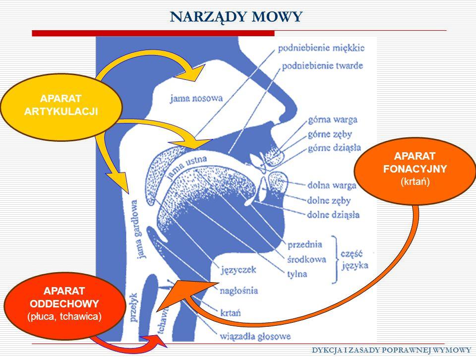 NARZĄDY MOWY DYKCJA I ZASADY POPRAWNEJ WYMOWY APARAT ODDECHOWY (płuca, tchawica) APARAT ARTYKULACJI APARAT FONACYJNY (krtań)
