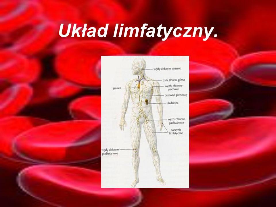 Układ limfatyczny.