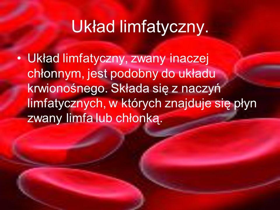 Układ limfatyczny, zwany inaczej chłonnym, jest podobny do układu krwionośnego. Składa się z naczyń limfatycznych, w których znajduje się płyn zwany l