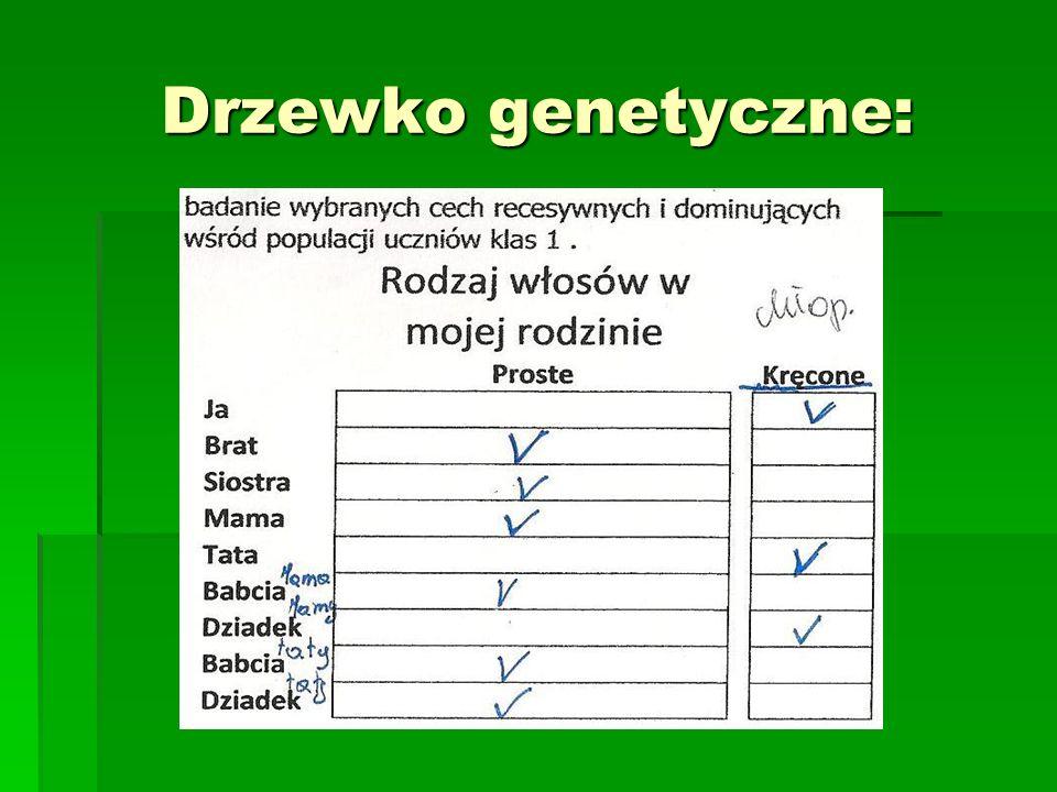 Drzewko genetyczne: