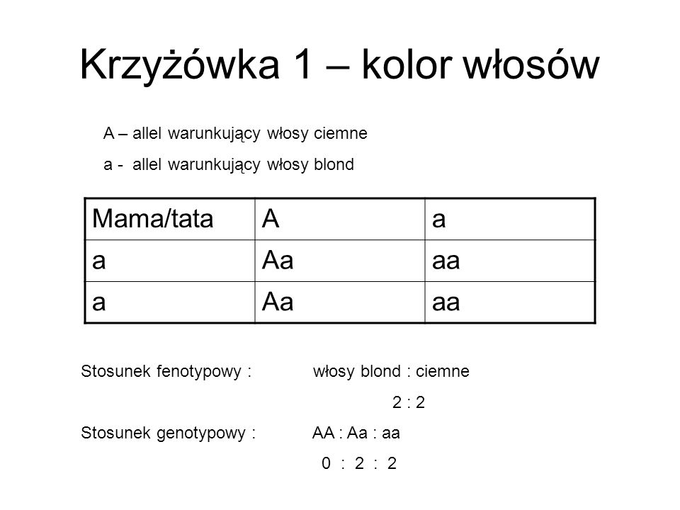 Krzyżówka 1 – kolor włosów Mama/tataAa aAaaa aAaaa Stosunek fenotypowy : włosy blond : ciemne 2 : 2 Stosunek genotypowy : AA : Aa : aa 0 : 2 : 2 A – a
