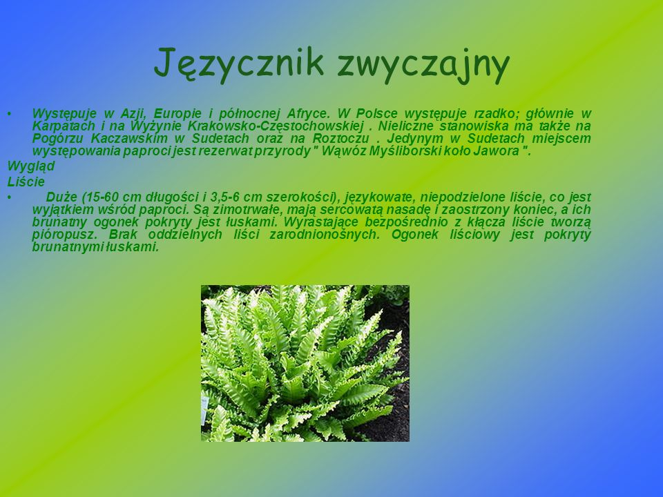 Języcznik zwyczajny Występuje w Azji, Europie i północnej Afryce. W Polsce występuje rzadko; głównie w Karpatach i na Wyżynie Krakowsko-Częstochowskie