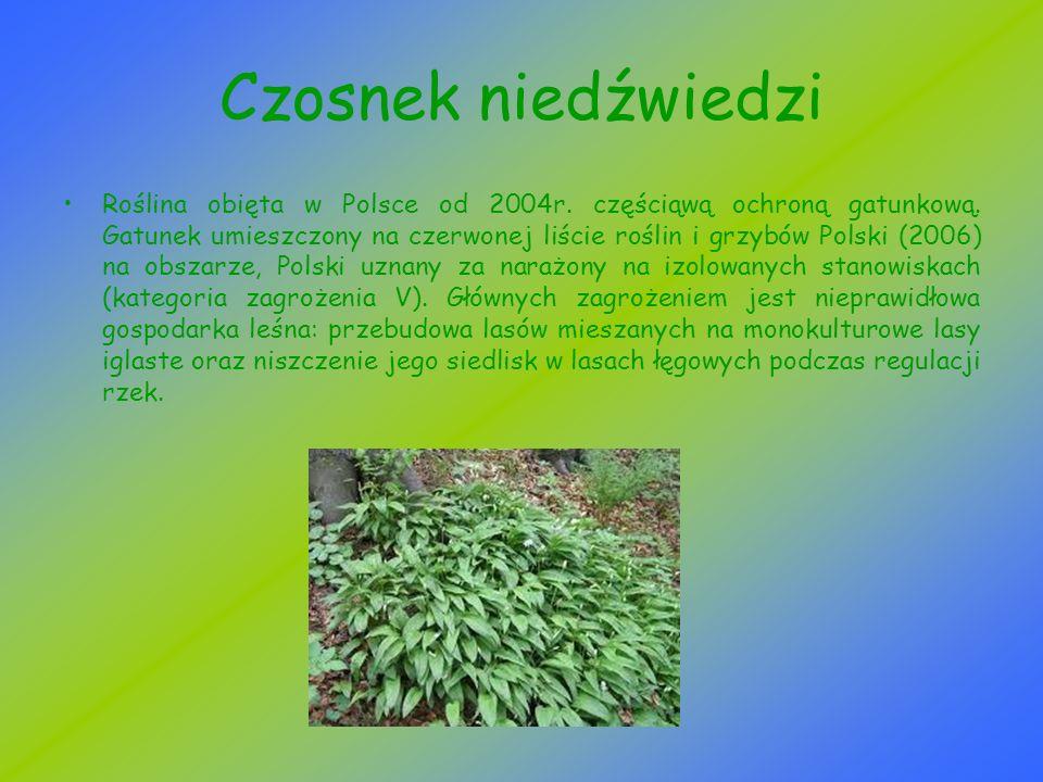 Berberys pospolity Berberys pospolity, berberys zwyczajny - gatunek krzewu należący do rodziny berberysowatych.