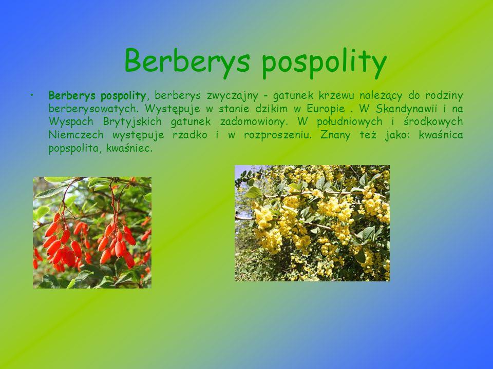 Berberys pospolity Berberys pospolity, berberys zwyczajny - gatunek krzewu należący do rodziny berberysowatych. Występuje w stanie dzikim w Europie. W