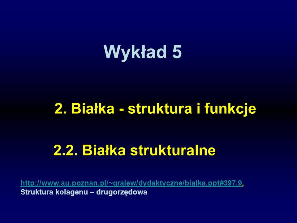 Wykład 5 2.2. Białka strukturalne 2. Białka - struktura i funkcje http://www.au.poznan.pl/~gralew/dydaktyczne/bialka.ppt#397,9http://www.au.poznan.pl/